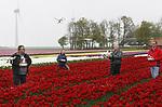 Foto: VidiPhoto<br /> <br /> CREIL - Amateurfotografen uit heel Nederland doen woensdag mee aan een fotowedstrijd met drones tussen de tulpen in Creil. Op het veld van kweker Jordi van Meer ligt een Tulpenmondriaan van ruim 6.000 m2 en 350.000 tulpen. Het bloemenmoza&iuml;ek is onderdeel van de tulpenbelevingswereld in de Noordoostpolder met ook een tulpenroute van 106 km en een showtuin met 460 verschillende tulpensoorten. Met meer dan 75.000 bezoekers inmiddels is het een enorm succes. Van Meer heeft de Tulpenmondriaan, die nu volop in bloei staat, het afgelopen najaar geplant in het kader van het 75-jarig bestaan van de polder en het 100-jarig jubileum van kunstbeweging De Stijl. Over twee weken wordt het Mondriaanveld machinaal gekopt. De bloemen worden verwijderd zodat de bollen in de grond optimaal kunnen groeien. De kwekerij van Jordi van Meer beslaat circa 100 hectare. In totaal produceert het familiebedrijf 35 miljoen snijtulpen in zowel Nederland als Canada. In de tulpenteelt wordt tegenwoordig ook veelvuldig gebruik gemaakt van drones, onder meer voor kwaliteitscontroles en bemesting. In de gemeente Noordoostpolder staan de meeste tulpen van Nederland: 1.848 hectare.