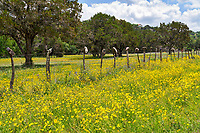 Ok we came across this great field of yellow wildflower but mostly what caught our eye was the boots on the cedar post.  This is a unique find of flowers and boots.  I am not sure what the boot represent but we had to stop and capture them in the Texas hill country.