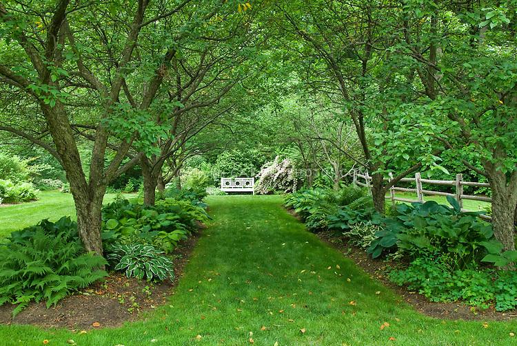 Hostas under trees in dry shade garden plant flower for Garden under trees
