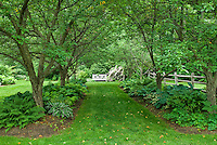 Walkway in dry shade garden under allee of trees, with hostas perennials planted underneath in backyard shaded garden bed