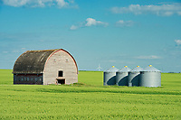 Barn, grain bins and canola crop<br />