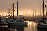 Fog in marina