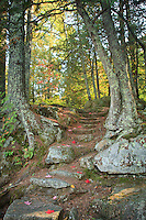 &quot;Autumn's Stairway&quot; <br />