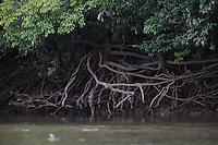 Pocone_MT, Brasil...Rio Cuiaba.Transpantaneira.Porto Jofre.Mangue.Foto: JOAO MARCOS ROSA / NITRO