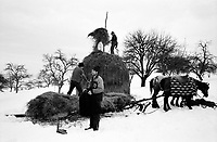 ROMANIA / Maramures / Valeni / January 2003..Friends transfer a haystack to a sledge for transport back home. ..© Davin Ellicson / Anzenberger..