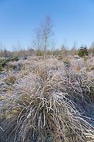 Frosty woodland, Chipping,Lancashire, England.