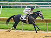 Why Not Be Sexy winning at Delaware Park on 8/1/16