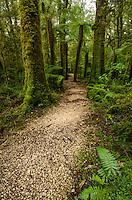 Walking track, Native bush, Oparara Basin, Karamea, New Zealand - stock photo, canvas, fine art print