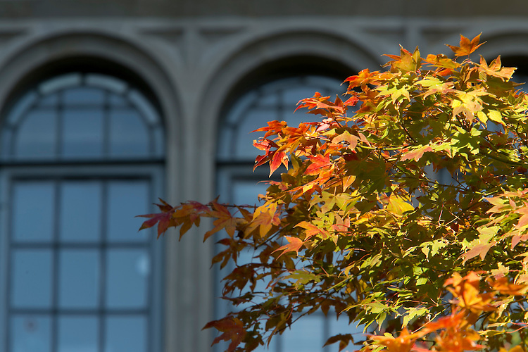 fall exterior views of Gray Building on the Chapel Quad on West Campus