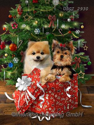 GIORDANO, CHRISTMAS ANIMALS, WEIHNACHTEN TIERE, NAVIDAD ANIMALES, paintings+++++,USGI2930,#xa# ,dog,dogs