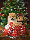 Christmas animals cute - Giordano