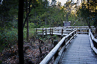 The wooden boardwalk through part of the Darlingtonia Wayside.  To the left of the walkway is evidence of recent work clearing some of the overgrown foliage that was inhibiting the growth of the Darlingtonias.