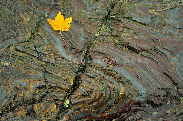 Highly folded iron-formation Vermillion District, early precambrian age rock, hematite, red jasper & chert, Tower-Soudan State Park, Minnesota, TomBean_Pix_0601.
