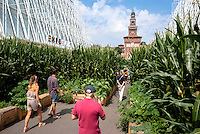 "Milano, Expo Gate, padiglione infopoint in largo Cairoli presso il Castello Sforzesco per l'Esposizione Universale 2015. Piante di granoturco per l'installazione ""Quantomais"" --- Milan, Expo Gate, info point in Cairoli square near the Sforza Castle for the World Exposition 2015. Corn plants for the installation ""Quantomais"""