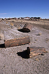 Petrified logs, Petrified Forest National Park, Arizona