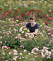 28/08/12 Rose Breeding Assistant, Rhian Kearney, 22, checks this year's rose plants.<br />