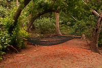 Hammock, Turtle Island, Yasawa Islands, Fiji