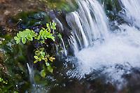 Europe/France/Aquitaine/24/Dordogne/Saint-Jean-de-Côle: Pisciculture: élevage de truites et écrevisses  et  Ferme Auberge Fon PEPY  - les eaux vives du ruisseau de la pisciculture