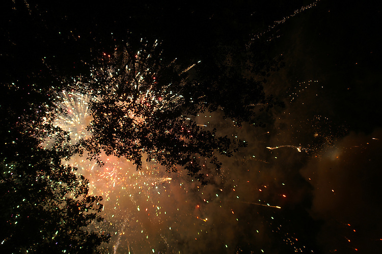 Fireworks highlight the lacework of the leaves in an oak tree.