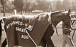 Affirmed (Exclusive Native), 1978 Triple Crown winner, at Saratoga in 1979