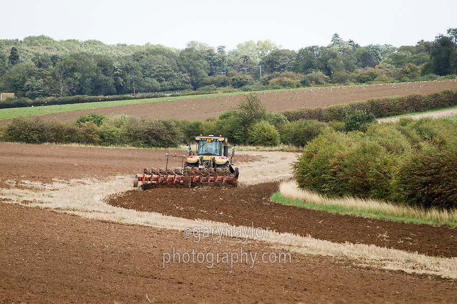 Ploughing wheat stubble with eleven furrow plough - September; North Lincolnshire