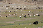 Hearder with sheep in Tibetan valley.