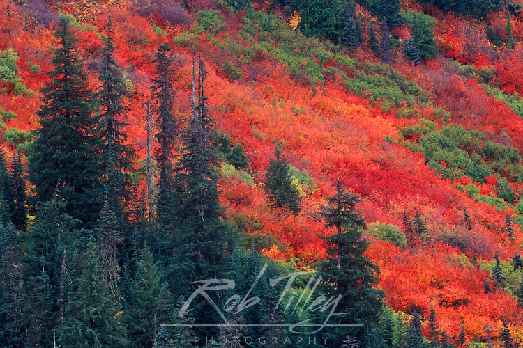 N.A., USA, Washington, Wenatchee National Forest, Steven's Pass, Autumn Color