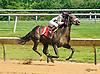 Bellimbusto winning at Delaware Park on 6/18/16