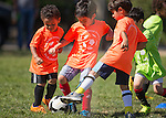 Coach Ken Soccer, 5-6 year olds, at Hillview Soccer Field, July 25, 2015