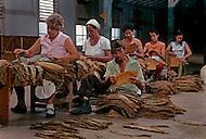 Cuba, March 1992: Selecting the tobacco leaves in a tobacco warehouse near Pinar del Rio, Cuba.