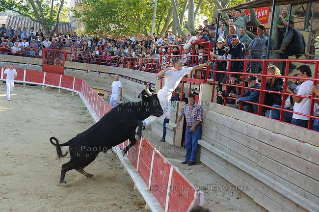Francia-Camargue. la course camarguaise è una corrida che si tiene nel sud-ovest della Francia. Il toro non viene messo a morte ed è lui il protagonista, non l'uomo. I rasateurs, torero, scendono in arena e devono togliere dalle corna del toro una coccarda. Ci vuole molta agilità, velocità ed un gran coraggio per affrontare e sfuggire al toro che carica e spesso ferisce il torero.