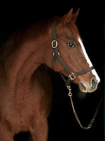 GENUINE RISK, at age 28, Newstead Farm, Upperville, VA, March 2005.  A hand, near her head, was erased with Photoshop.
