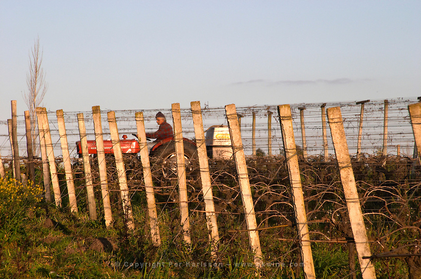 A vineyard worker on a tractor treating the vines. Bodega Carlos Pizzorno Winery, Canelon Chico, Canelones, Uruguay, South America