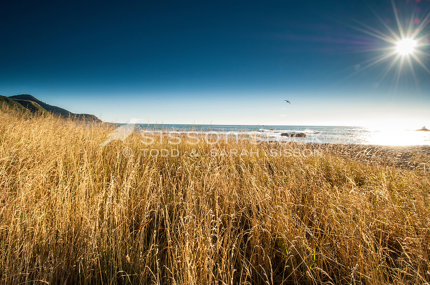 Summer beach scene, Kaikoura Coast NZ. Golden grasses, blue sky, surf and sun star.