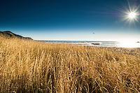 Summer beach scene, Kaikoura Coast NZ. Golden grasses, blue sky, surf and sun star.