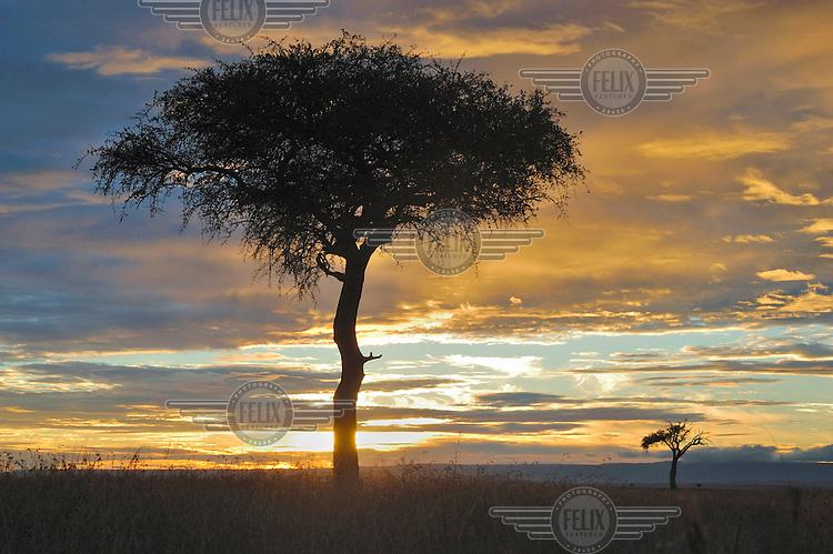 The sun rises over the savannah in the Masai Mara National Reserve Kenya.