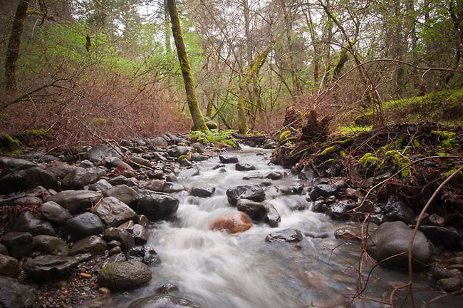 Ritchey Creek, Bothe Park