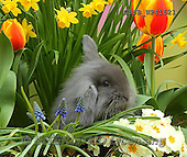 Kim, EASTER, OSTERN, PASCUA, photos+++++,GBJBWP41621,#e#