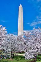 Washington Monument, Washington DC, Framed by, Cherry Blossom trees,