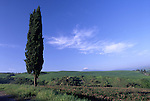 Europe, ITA, Italy, Tuscany, Pienza, Landscape, Typical cypress and Cirrus cloud, Cupressus sempervirens....[ For each utilisation of my images my General Terms and Conditions are mandatory. Usage only against use message and proof. Download of my General Terms and Conditions under http://www.image-box.com or ask for sending. A clearance before usage is necessary...Material is subject to royalties. Each utilisation of my images is subject to a fee in accordance to the present valid MFM-List...Contact | archive@image-box.com | www.image-box.com ]