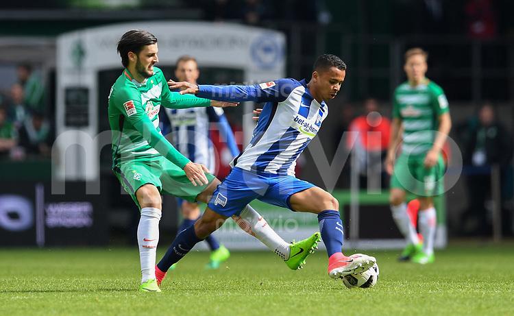 FUSSBALL     1. BUNDESLIGA      31. SPIELTAG    SAISON 2016/2017  SV Werder Bremen - Hertha BSC Berlin                          29.04.2017 Florian Grillitsch (li, SV Werder Bremen) gegen Allan(re, Hertha BSC Berlin)