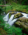 Olympic National Park, WA<br /> Sol Duc River splits at Sol Duc Falls and flows under a hikers foot bridge