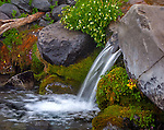 Mount Rainier National Park,  WA  <br /> Small waterfall detail on mossy rocks in the Paradise River