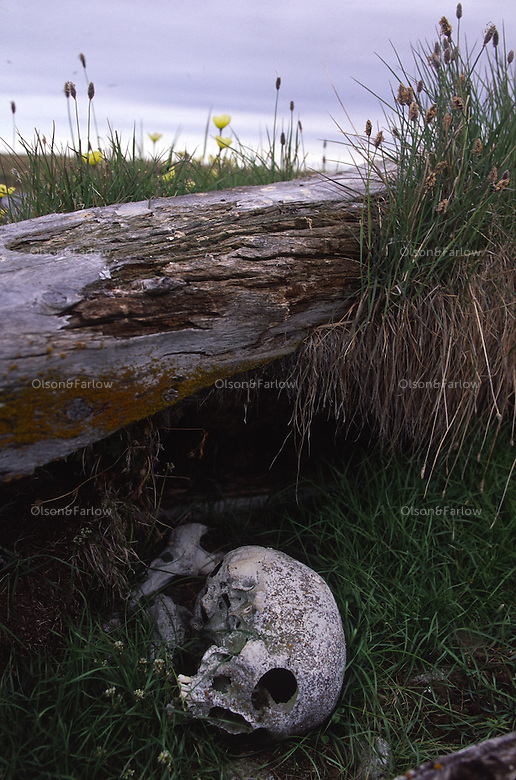 Discoveries still abound in Alaska's remote BLM lands. Near Lonely, Alaska, on the Beaufort Sea, a skull suddenly comes to light likely the remains of a sailor on a 19th century whaler, stranded by weather and done in by lead poisoning from canned rations.  Sod houses and decomposing boats complete the desperate archeological scene.