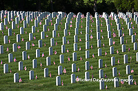 65095-01709 Flags on Memorial Day at Jefferson Barracks National Cemetery, St Louis, MO
