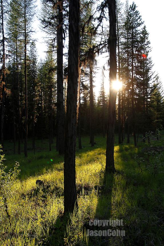 Montana July, 2010. Photo by Jason Cohn