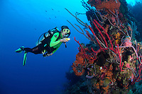 nr0415-D. scuba diver Melissa Cole (model released) admires healthy sponges on coral reef. Belize, Caribbean Sea.<br /> Photo Copyright &copy; Brandon Cole. All rights reserved worldwide.  www.brandoncole.com