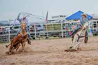 Local Team Roping