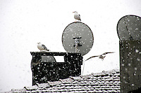 Urban snow scene with seagulls, Istanbul, Turkey