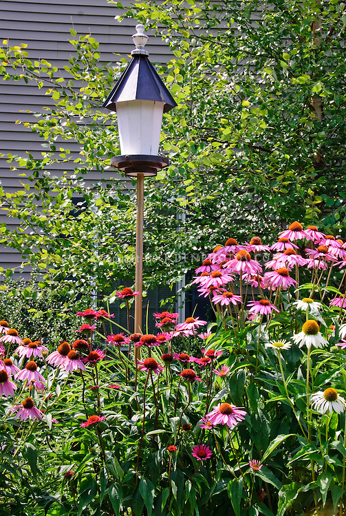 Native wildflowers plants Echinacea coneflower in mixed colors with birdhouse in summer garden against house
